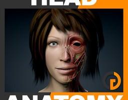 human female head anatomy 3d model max obj 3ds fbx c4d lwo lw lws