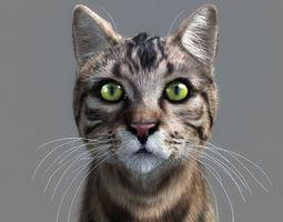 Cat-- 3D
