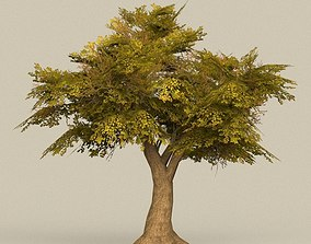 Game Ready Tree 16 3D asset