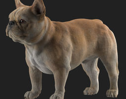 French Bulldog 3D