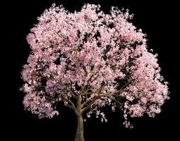 flowers Sakura 4 3D