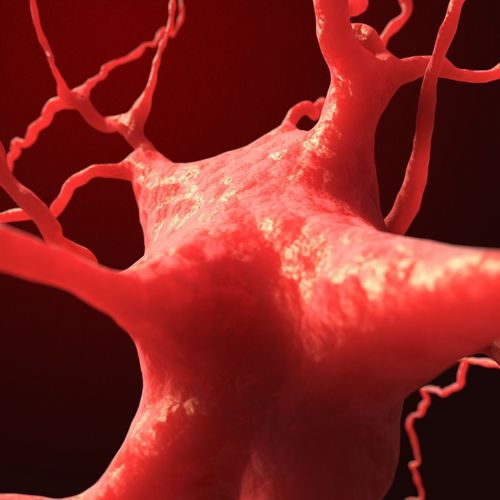 dendrite neuron nerve cell 3d model obj mtl 3ds fbx c4d dxf dae 1