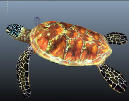 animated VR / AR ready UnderSea Turtle low-poly 3d model
