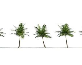 3D Palm DictyospermaAlbum