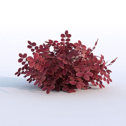 plant berberys garden 3d model low-poly obj mtl fbx blend tga 1