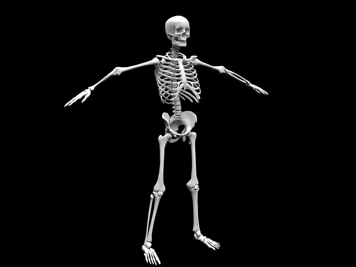 Realistic Human Skeletal System