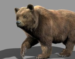 3d animated bear braun