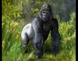 3d model gorilla  animated