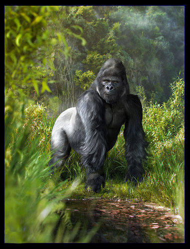 gorilla  3d model rigged animated max fbx 1