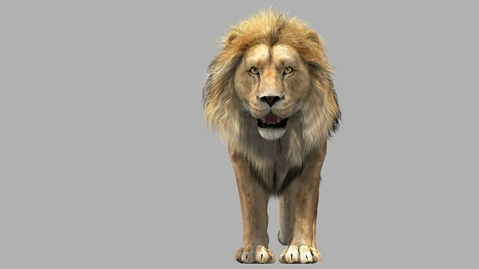 lion animation 3d model rigged animated max 1