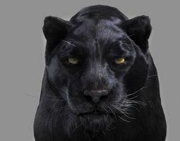 Panther black 3D Model