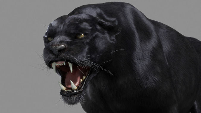 Panther black 3D Model animated rigged .max - CGTrader.com