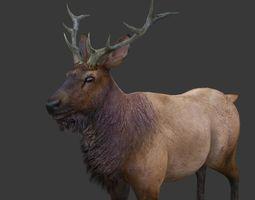 ELK deer 3D model VR / AR ready