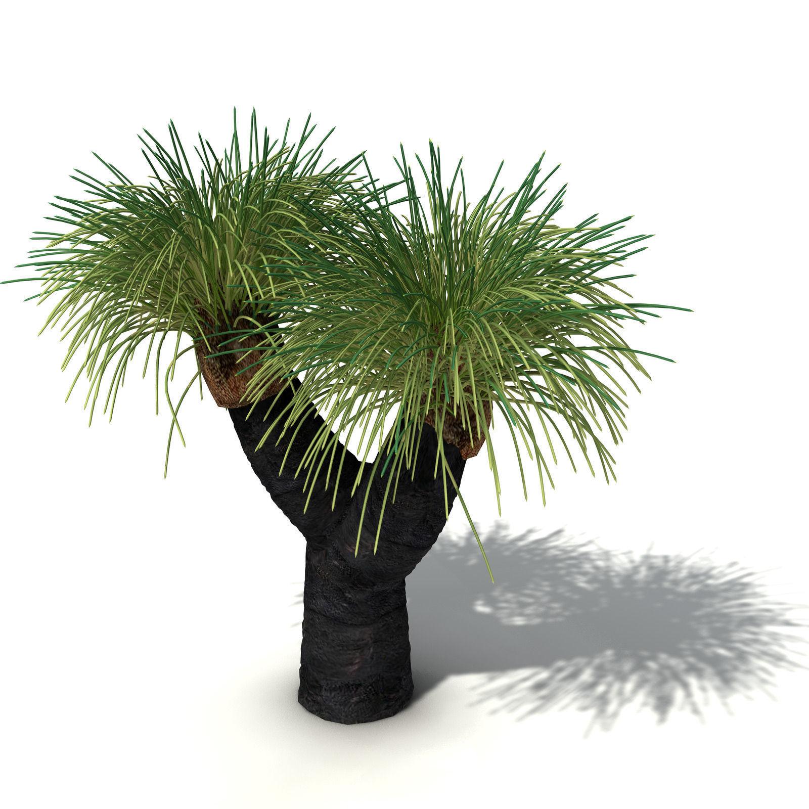 Xfrogplants Australian Grass Tree 3d Model Max Obj 3ds
