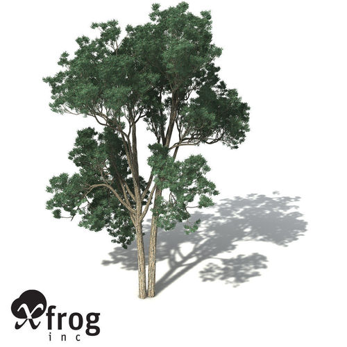 XfrogPlants Jarrah3D model