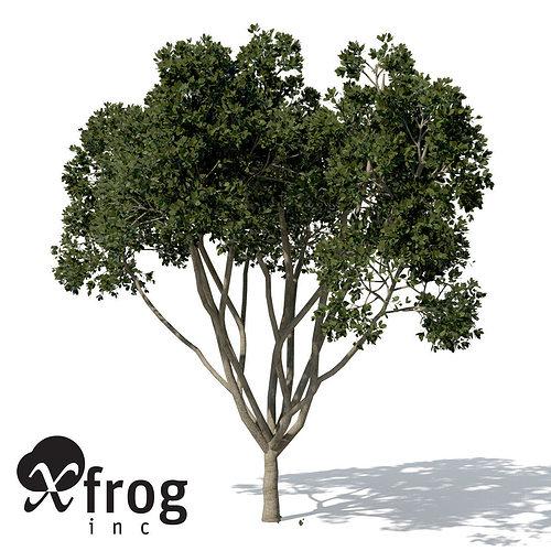 xfrogplants weeping fig 3d model max obj mtl 3ds c4d lwo lw lws ma mb 1