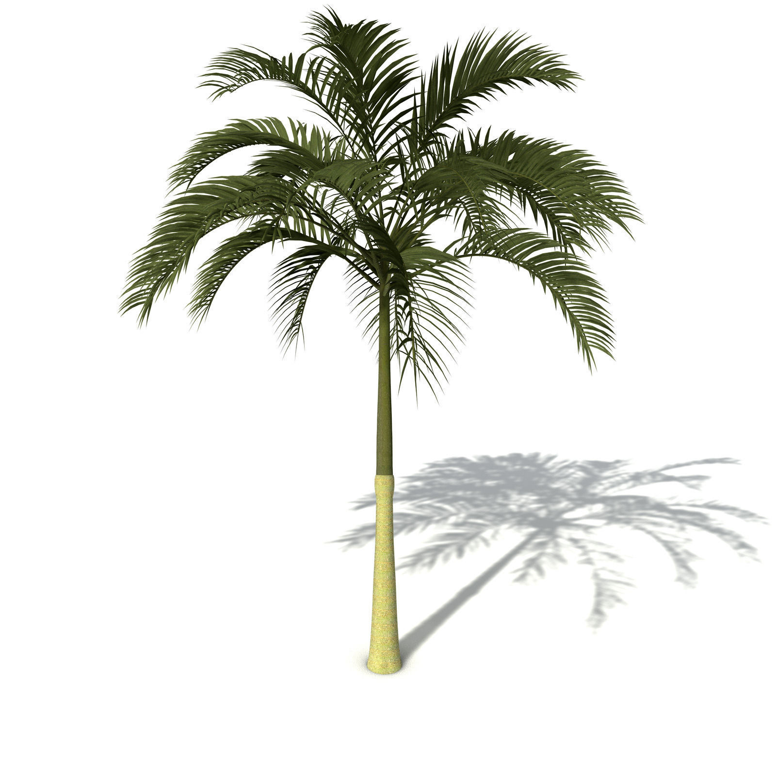 XfrogPlants Alexandra Palm 3D Model .max .obj .3ds .c4d ...