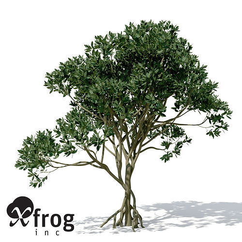 xfrogplants asiatic mangrove 3d model max obj 3ds c4d lwo lw lws ma mb 1