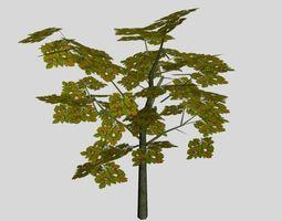 Wood 01 3D Model
