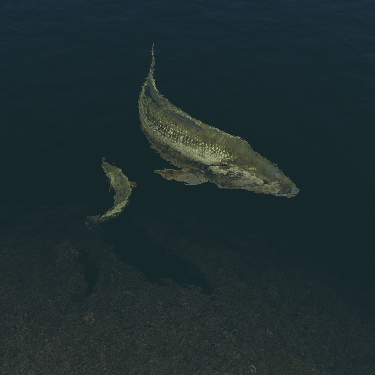 Largemouth bass 3d model animated rigged max for Bass fishing 3d