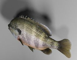 bluegill 3d model animated game-ready