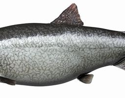 Lake Trout 3D asset
