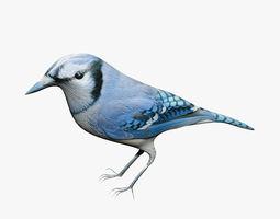 Blue Jay 3D asset
