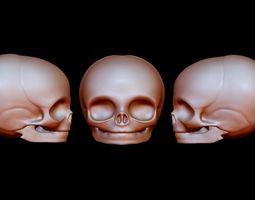 A baby basic head Skeleton 3D printable model