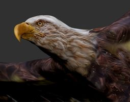 VR / AR ready animated eagle 3d model