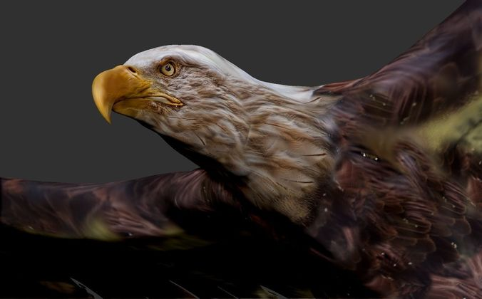 eagle 3d model low-poly rigged animated max obj mtl fbx 1