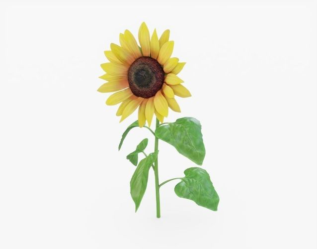 sunflower 3d model obj mtl 3ds fbx stl 1