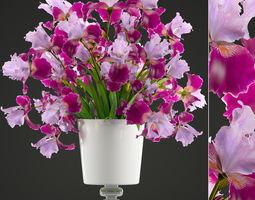 Flower bouquet of iris 3D model