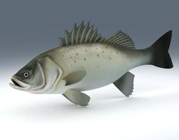 Perch Weever Sea Bass Fish 3D model game-ready