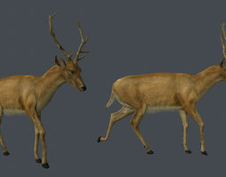 Deer low poly animated  Unity engine only package 3D Model