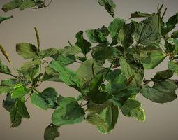 Photorealistic Broadleaf Plantain - plant for 3D asset 1