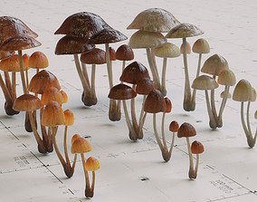 3D model Mushroom Psilocybe 3 Types plus Emissive 3