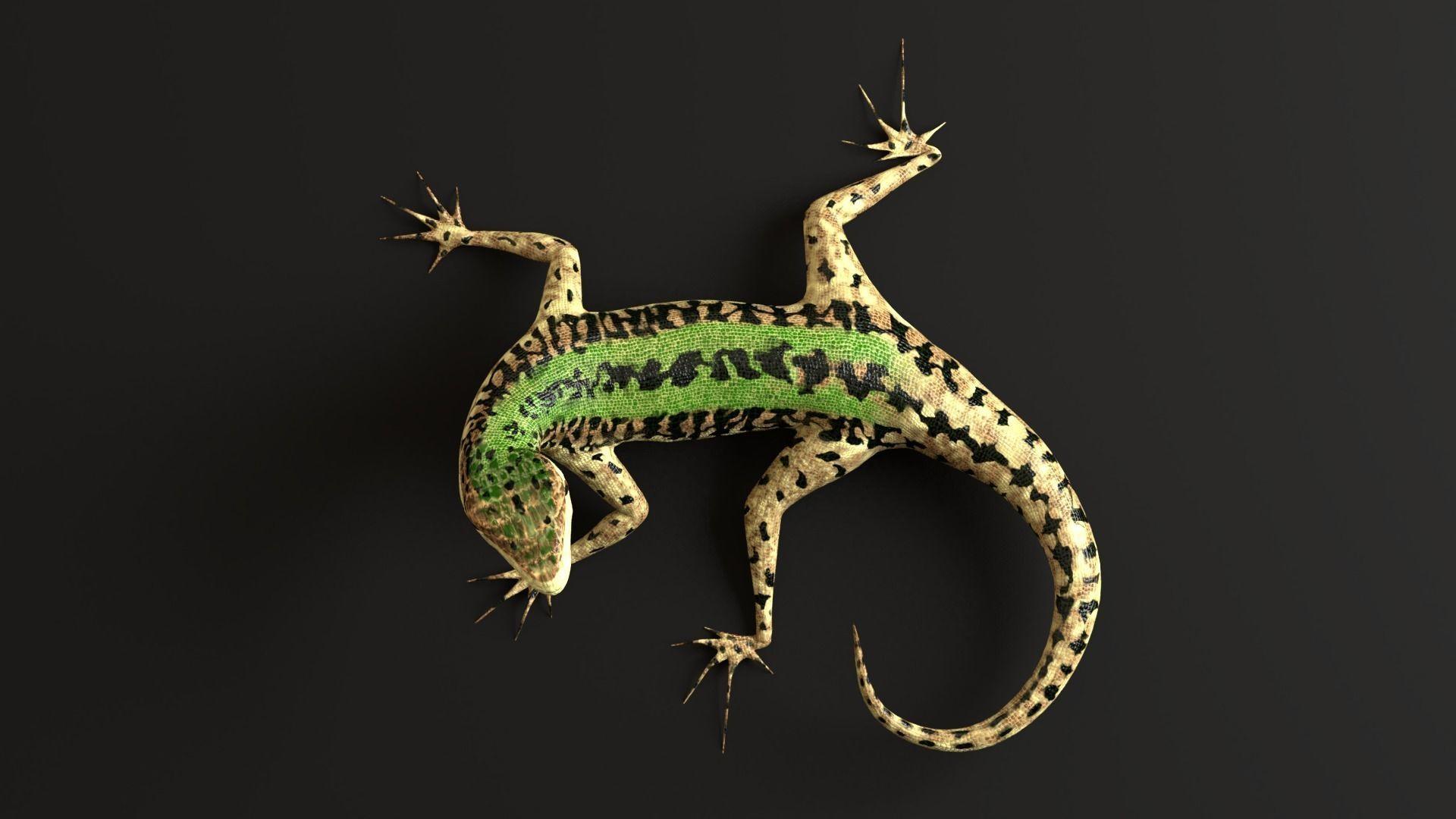 Green Lizard- Podarcis Sicula