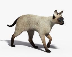 Siamese Cat FUR ANIMATED 3D Model