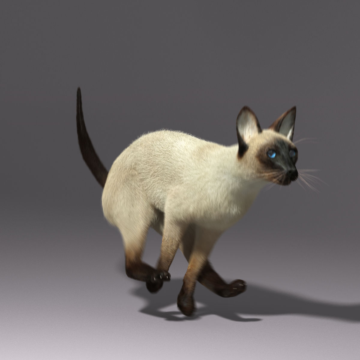 siamese cat 3d model - photo #44