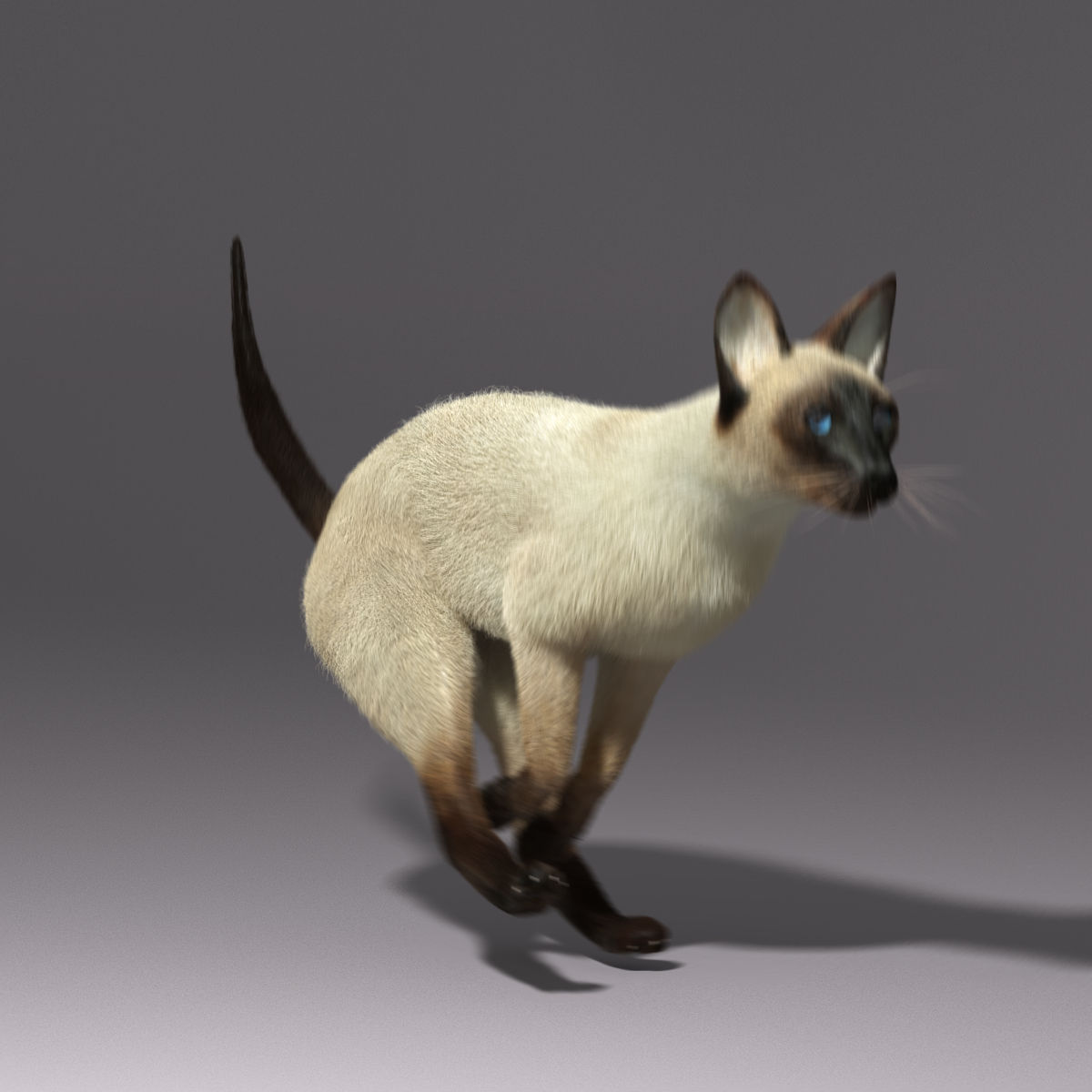 siamese cat 3d model - photo #8