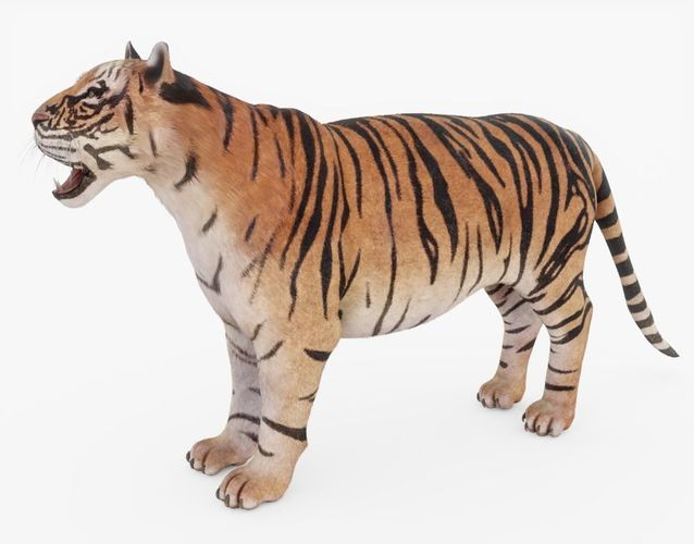 tiger fur 3d model obj mtl 3ds fbx stl blend 1