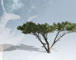 realtime acacia tortilus tree set 3d asset