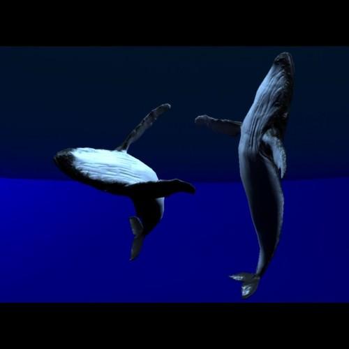 Hump back whale3D model