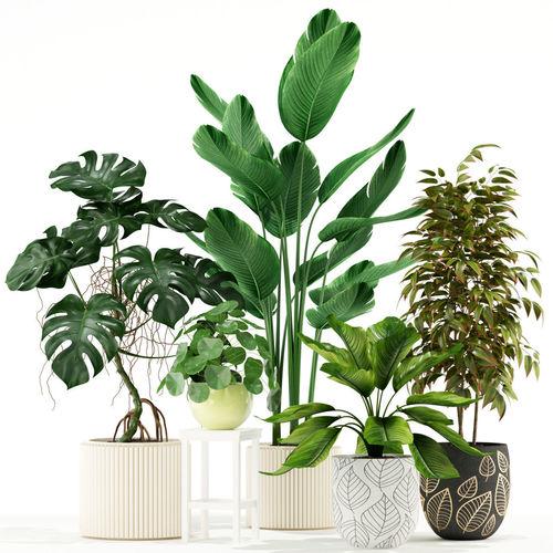 plants collection 117 3d model max fbx 1