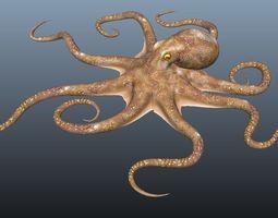 Animated Cartoon Octopus 3D asset VR / AR ready
