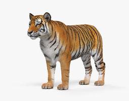 Tiger zoo 3D