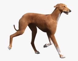 Azawakh Dog FUR ANIMATED 3D Model
