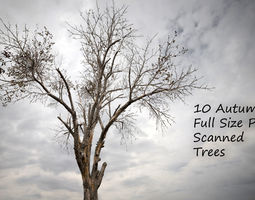 3D asset 10 Autumn Photo-Scanned Full Size Trees