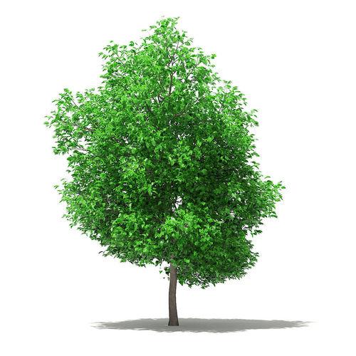 grapefruit tree 3d model max obj mtl fbx c4d mat uasset 1