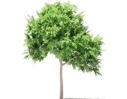 3D model Common Fig Tree